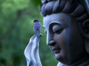 buddha_bird